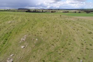 Forage and crop innovations on show at the Woolarama Landcare display