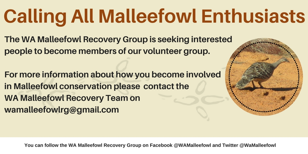 Calling all malleefowl enthusiasts