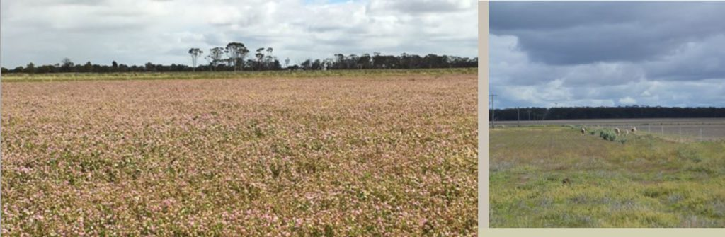Pasture mix shines through on salty country
