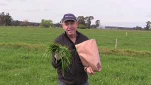 Three ways tissue-testing can help pasture growth