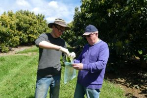 Data collection begins for avocado eDNA Project