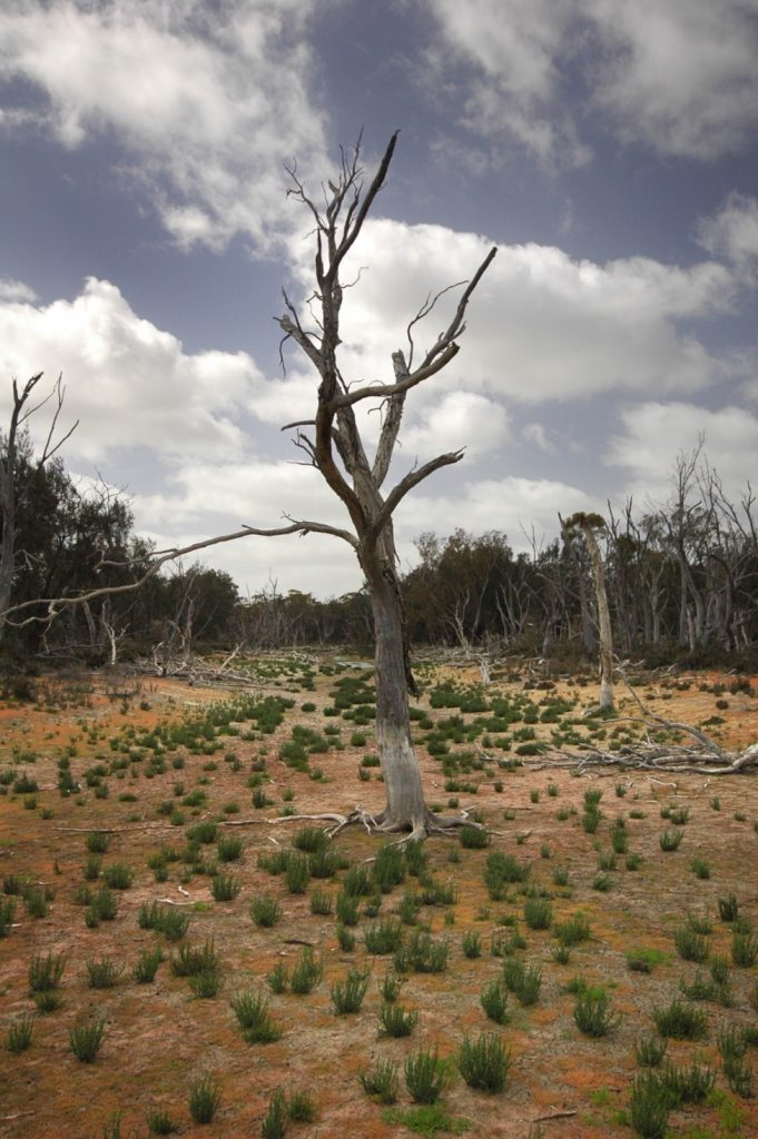 $20 Million Drought Resilience Boost for South West