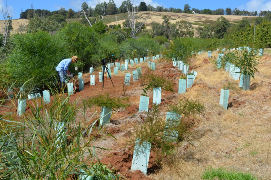 Double benefits for South West farmers planting native trees