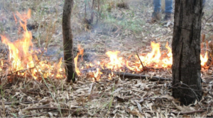 Cultural Custodians Bestow Traditional Fire Management Knowledge