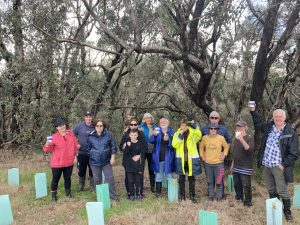 Treendale Reserve Planting Building Protection for Possums
